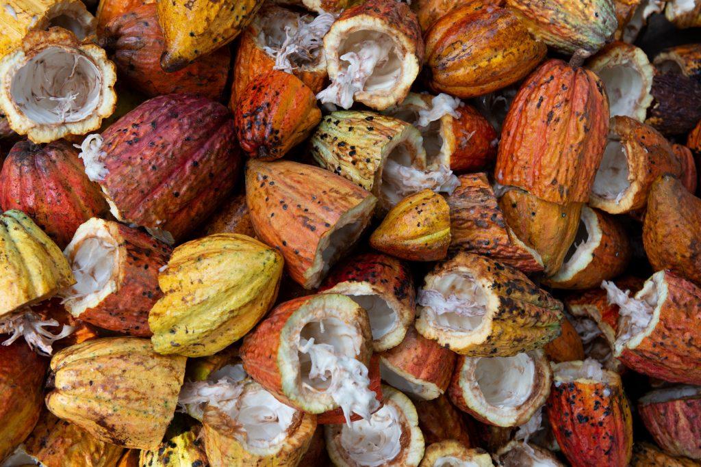 cacao-fruit