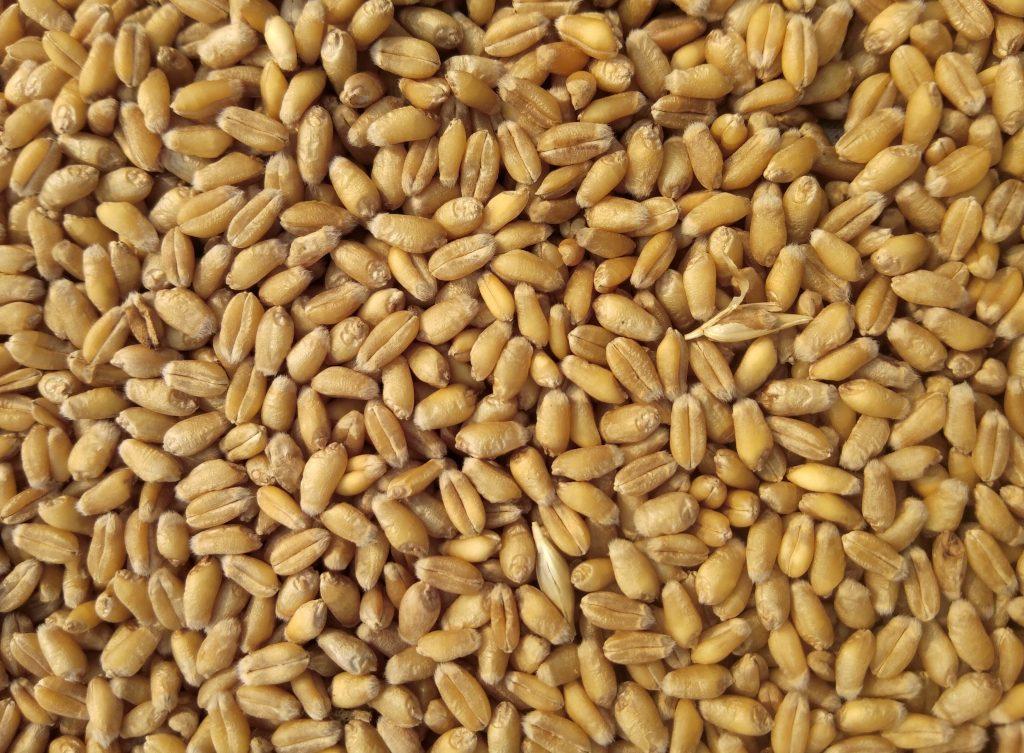 grain-bulk