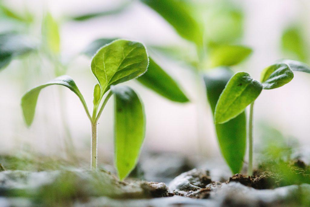 growing-company