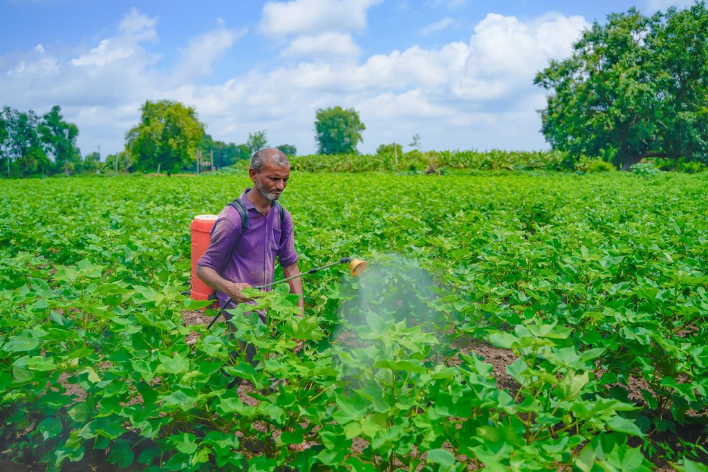 cotton farmer spraying cotton field