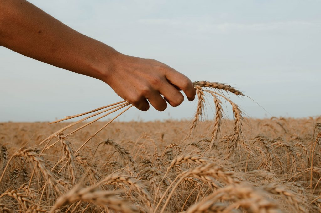 commodity-grain