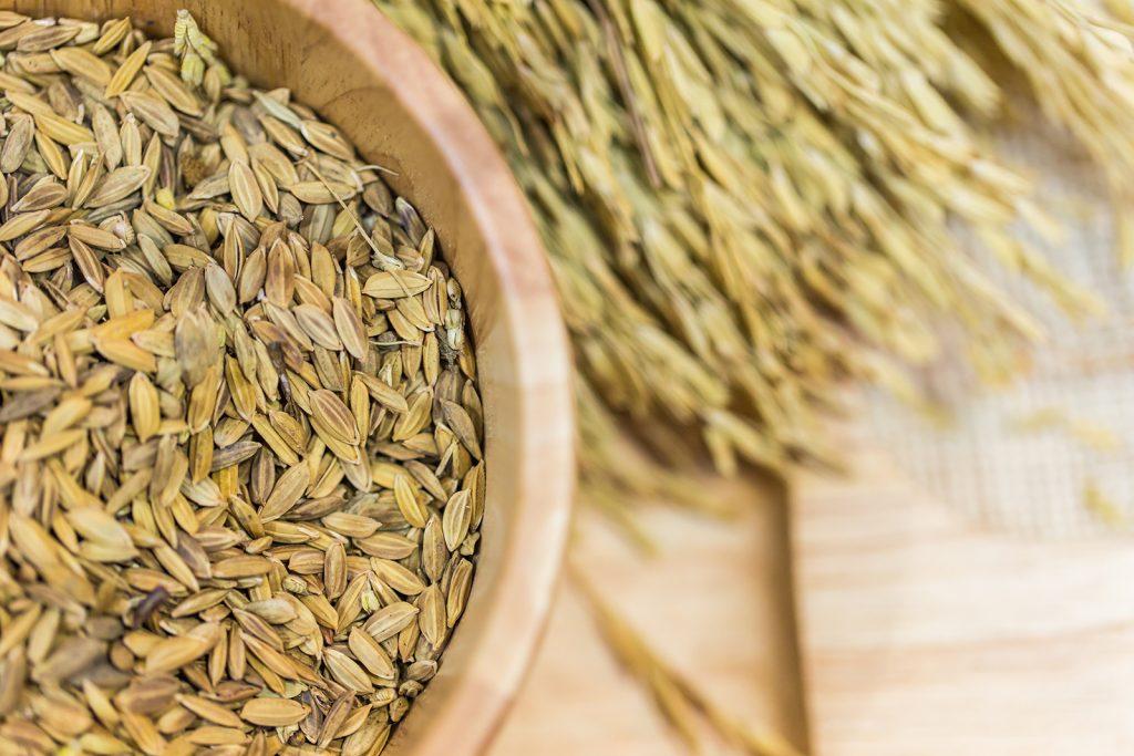 Global production of grains surpasses 2,5 billion tons